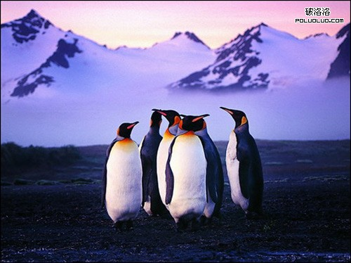 企鵝算法觀察和研究